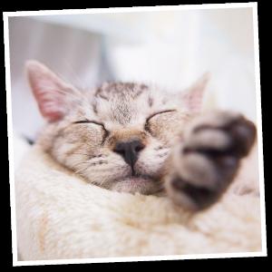 pet-cat1