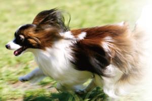 pet-dog3